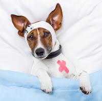 Razas de perros expuestas a cancer