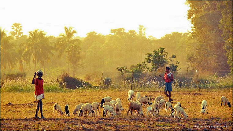 emerging photographers, Best Photo of the Day in Emphoka by Satya Murthy Arepalli, https://flic.kr/p/qva5UK