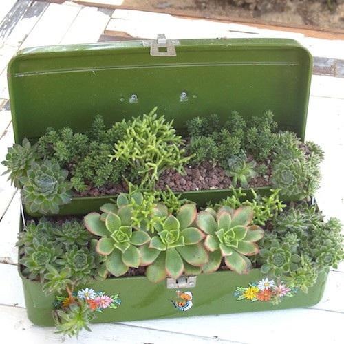 ideias de mini jardim:Mini Jardim – cultive o seu!