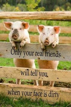 HA HA ---Special Friends will be very HONEST with us!!!!!