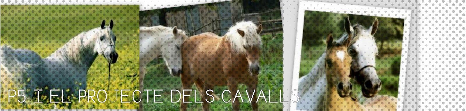 P5 I EL PROJECTE DELS CAVALLS