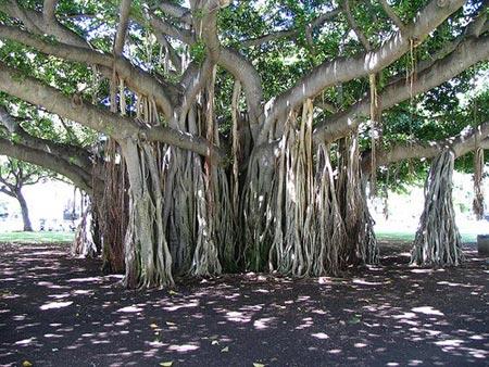 amazing tree10 773514 - Amazing pictures