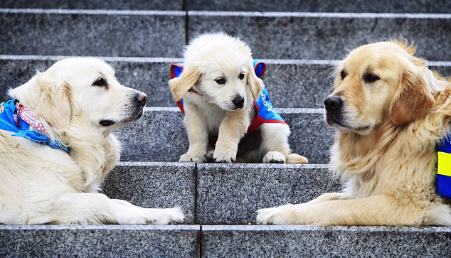 Assistance-Dogs-Australia-Awareness-Week-Martin-Place