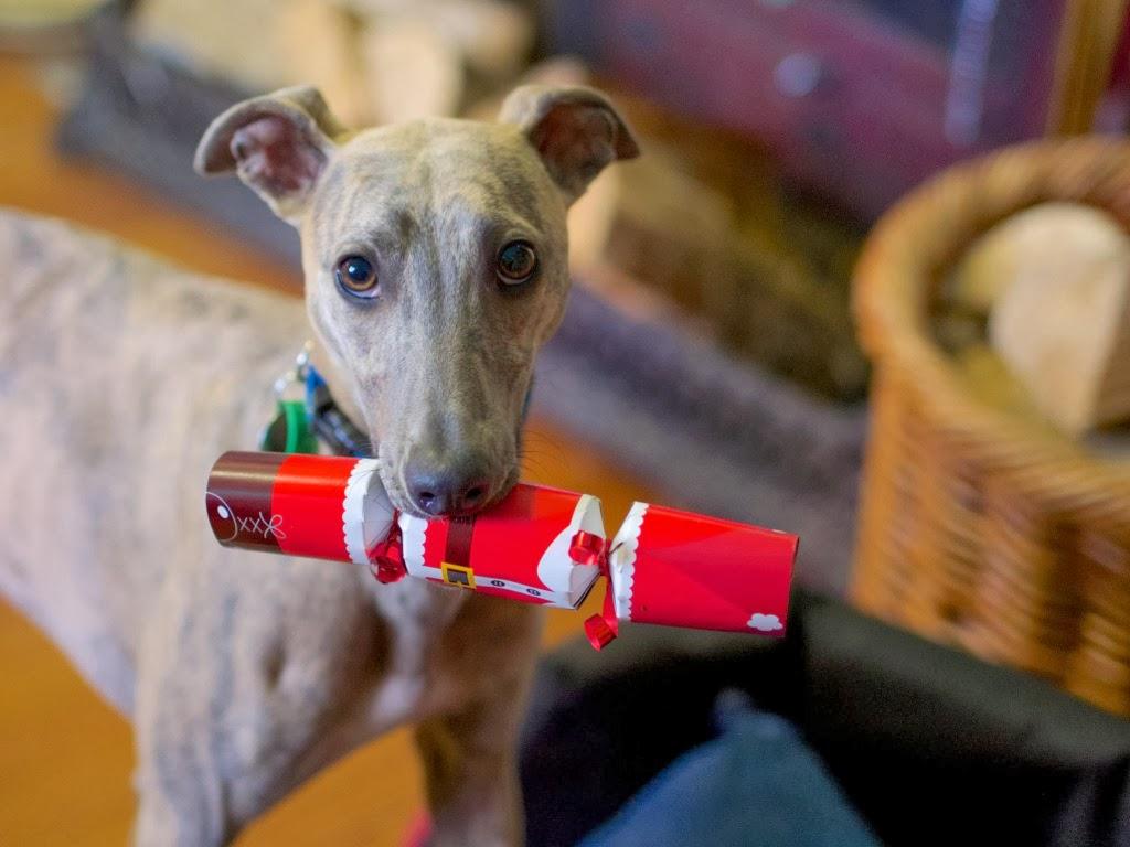 """<img src=""""http://2.bp.blogspot.com/-wbcl36abW5A/UtqcPFT4MLI/AAAAAAAAIzY/Oxi0C4S53NQ/s1600/obedient-dog.jpeg"""" alt=""""obedient dog"""" />"""