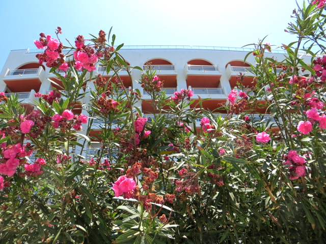 arguineguin gran canaria red flowers