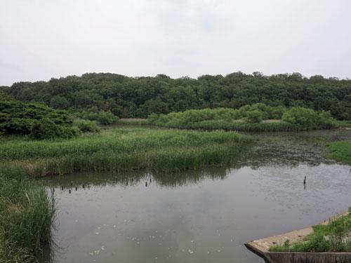 Tenpaku Park Nagoya Aichi