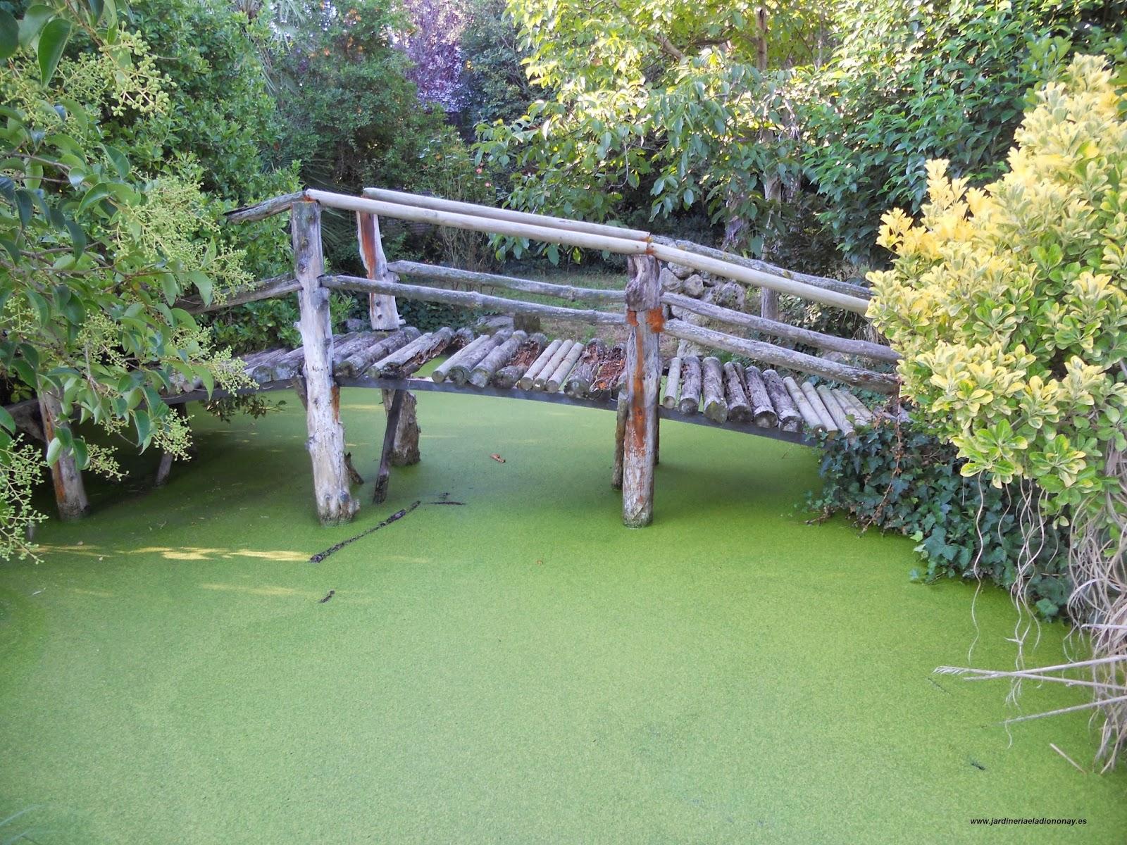 Jardineria eladio nonay limpieza de estanque jardiner a for Que significa estanque