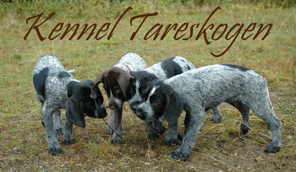 Kennel Tareskogen