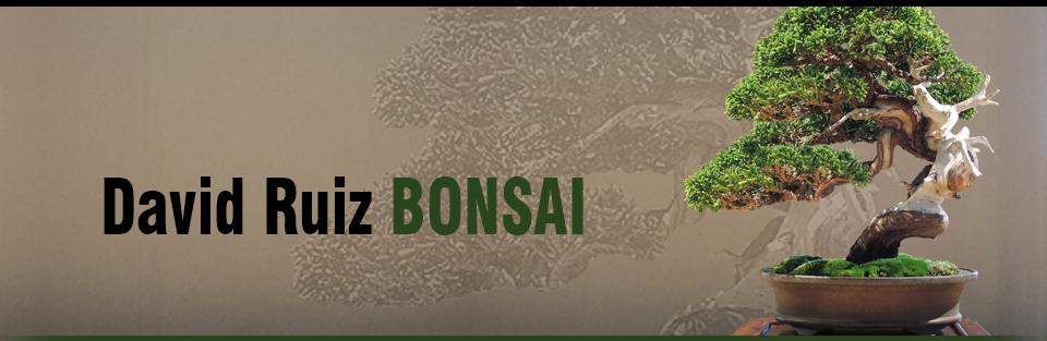 David Ruiz Bonsai