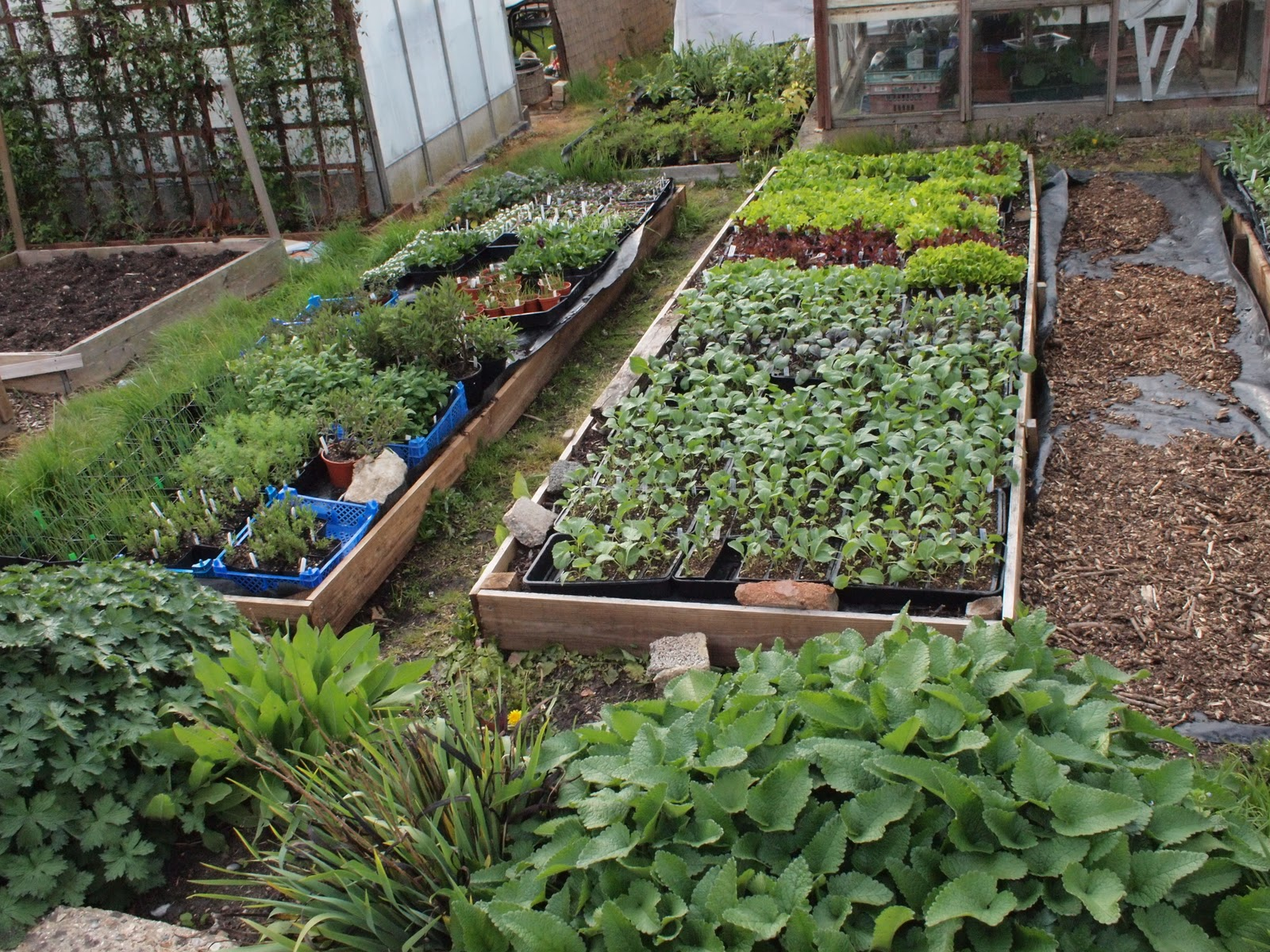 WI Finchley: June meeting - creative container gardening