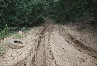 Mud trail deep ruts in forest four wheeling