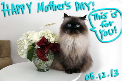 happy mother's day cat