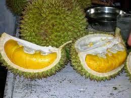 Trip Medan Makan Durian