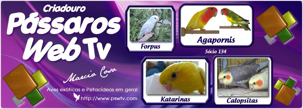 Criadouro de Passaros WEB-TV