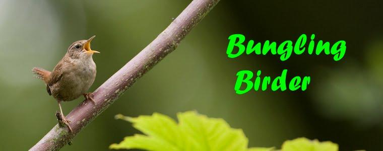 Bungling Birder