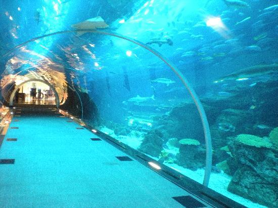 Dubai Aquarium & Underwater Zoo - United Arab Emirates