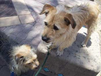 Missy and Princess, two little furry companions looking for a home