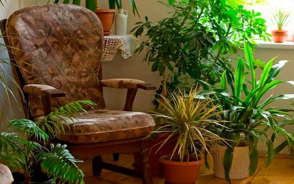 por lo general las plantas y las flores de interior son fciles de cultivar sin embargo siempre hay que estar pendiente de los principales problemas que