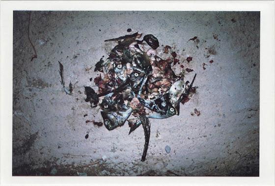 dirty photos - fumus - a photo of eaten fish pile