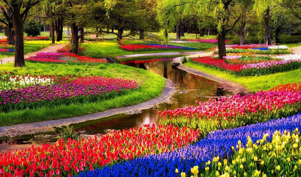 Jardim de flores keukenhof em amsterd dicas de amsterd for Jardin keukenhof