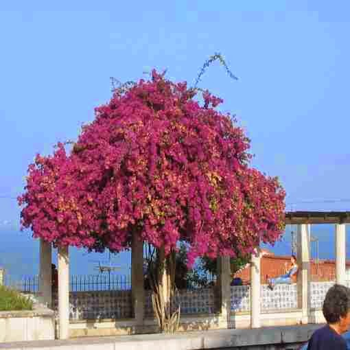 Summer, hot, Portugal, 2006