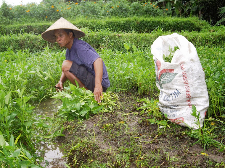 MAN CUTTING EDIBLE LEAVES IN THE FIELDS