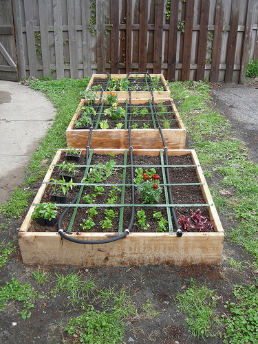 Eat Live Grow Paleo Square Foot Gardening Mulching and Watering