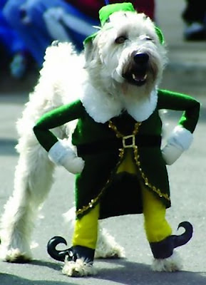 12 Creative and Unusual Dog Costumes (12) 10