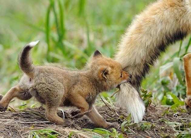 fox photo gallery1