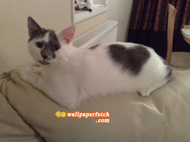 cat pee and bleach