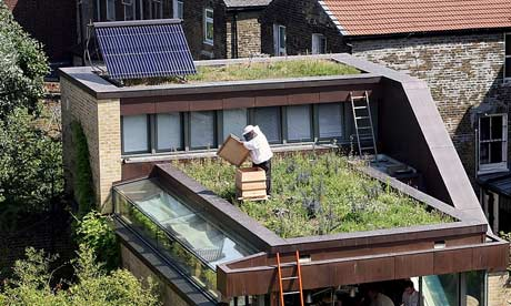 lesurvivaliste une introduction a l 39 apiculture. Black Bedroom Furniture Sets. Home Design Ideas