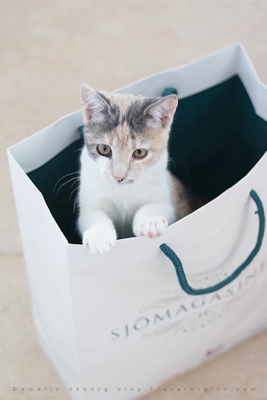 cat in bag, cat paper mag, sjömagasint, gosig mus, cat gosig mus, mus ikea