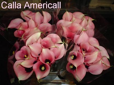 Calla Americall pic