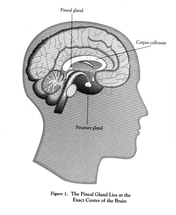 La química de la conciencia.