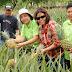DA-Daet  introduces 2 new pineapple varieties in Camarines Norte
