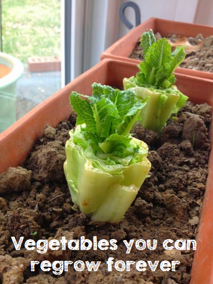 Vegetables you can regrow forever #vegetable_gardening