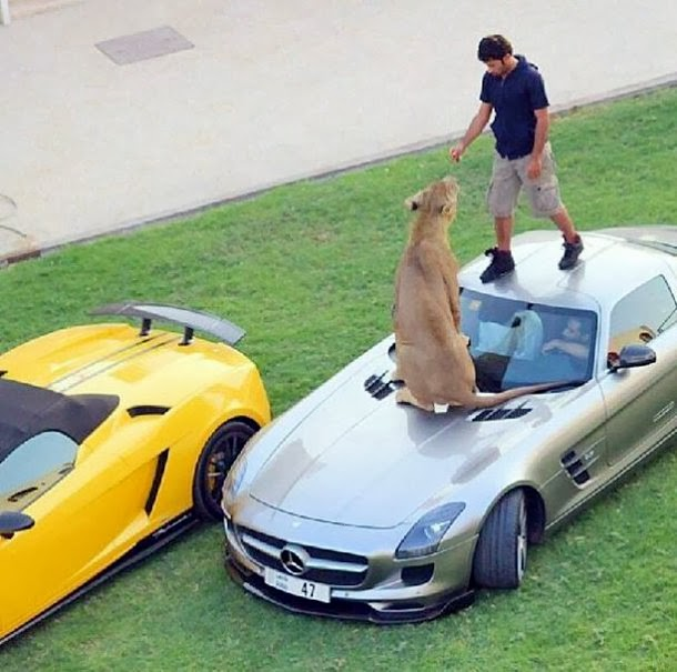 Arabian Millionaire and his Feral Cats
