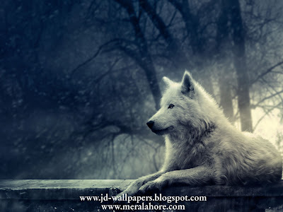 anime wolf wallpaper. Dark Anime Wallpaper