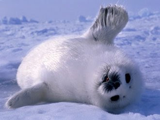 Cute Baby Seals | Photos | Funny And Cute Animals