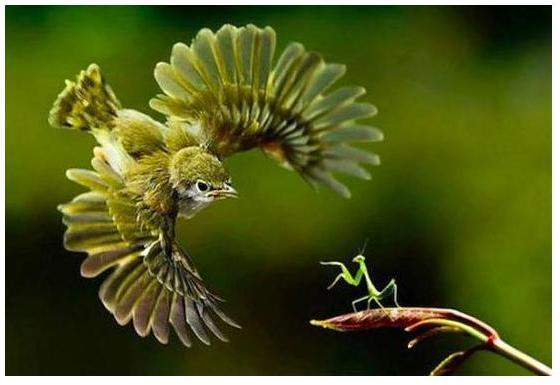 Welcome about 9gag i just love these photos under this genre its all about timing gumiabroncs Choice Image