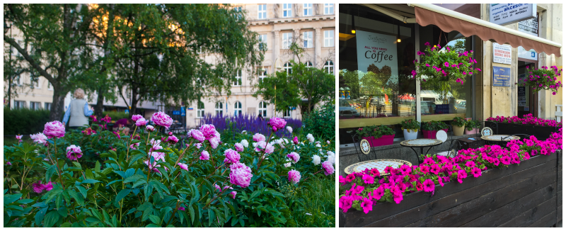 summer pink flowers and peonies in warsaw poland