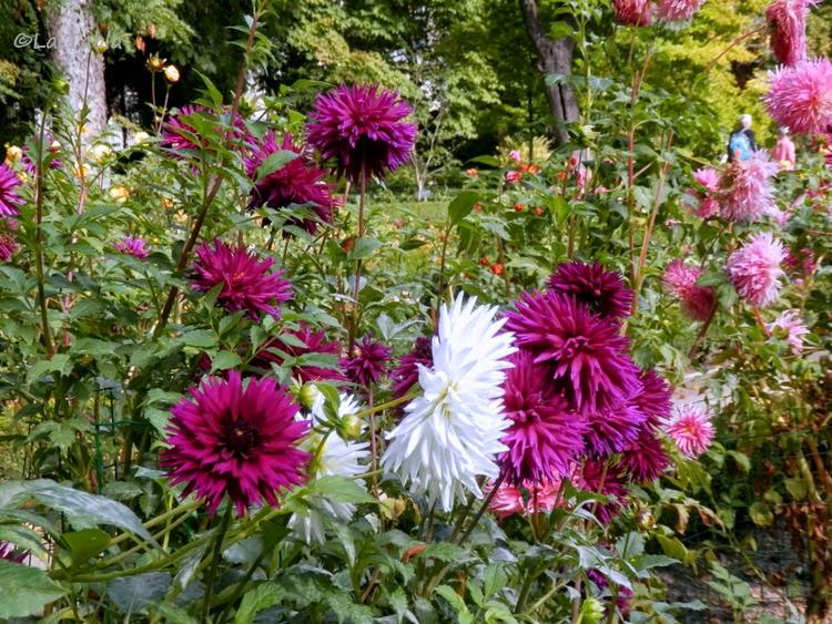 Dalias en el jard n bot nico de madrid for Jardin botanico madrid horario