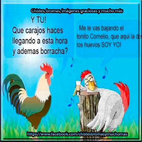 imagenes graciosas gallinas GP - imagenes chistosas de gallinas