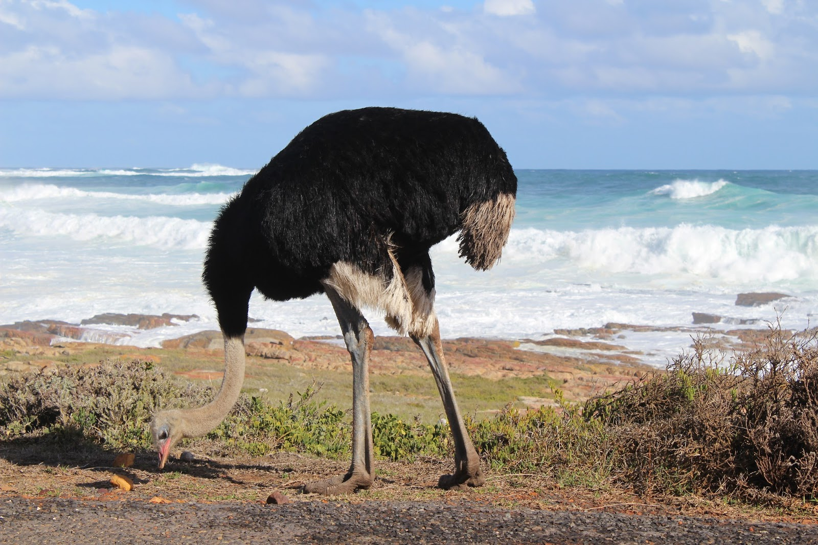 my thoughts from the deep end ostriches baboons and penguins