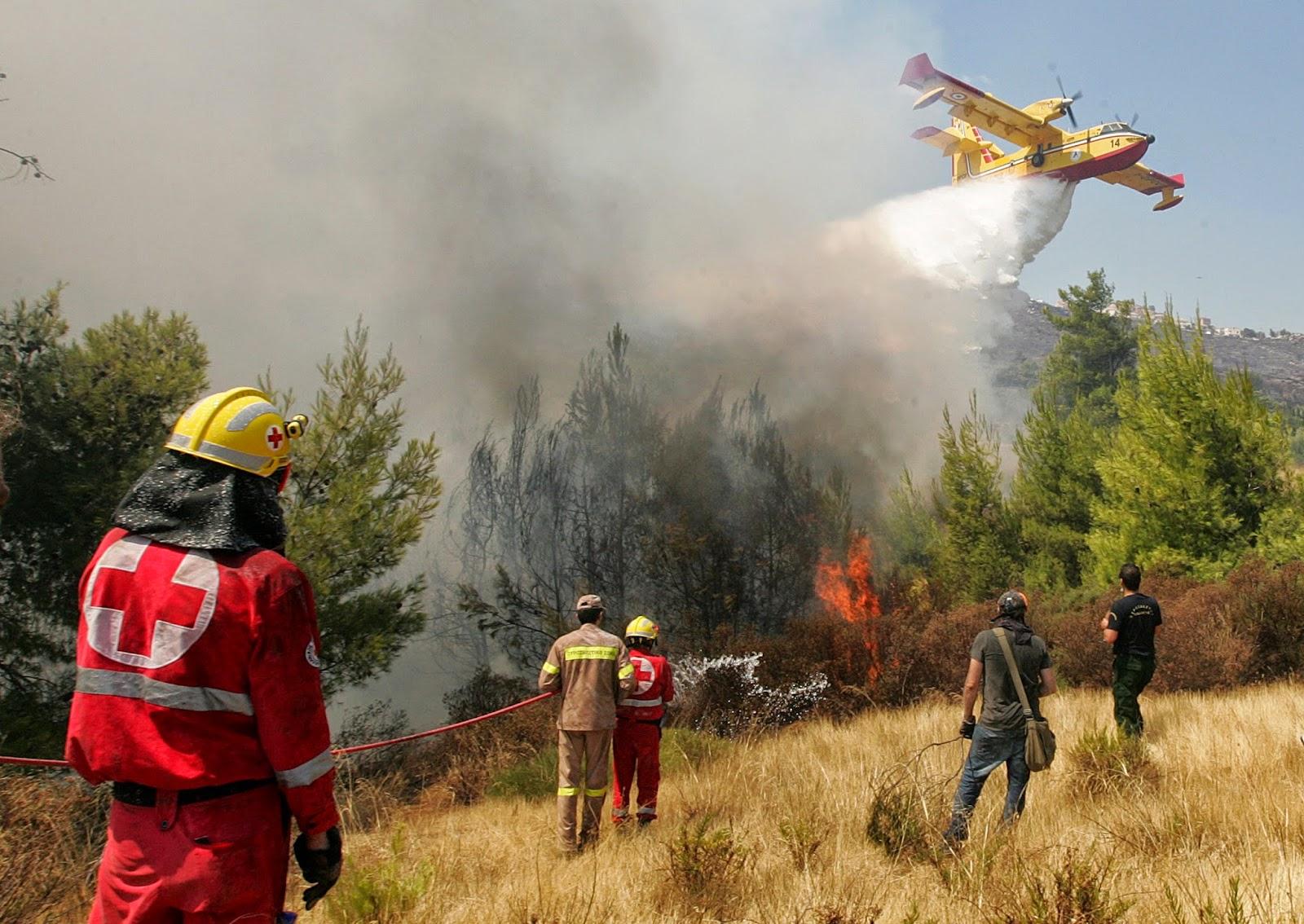 Ini Wilayah Rawan Terjadi Kebakaran Hutan