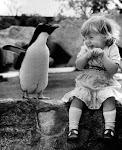 Pingvinmetis