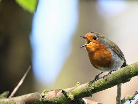 Foto Burung Trontong Terbaik
