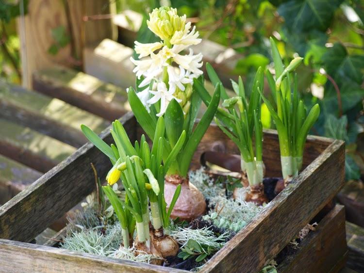 Haveplaner og plantebegejstring: marts 2015