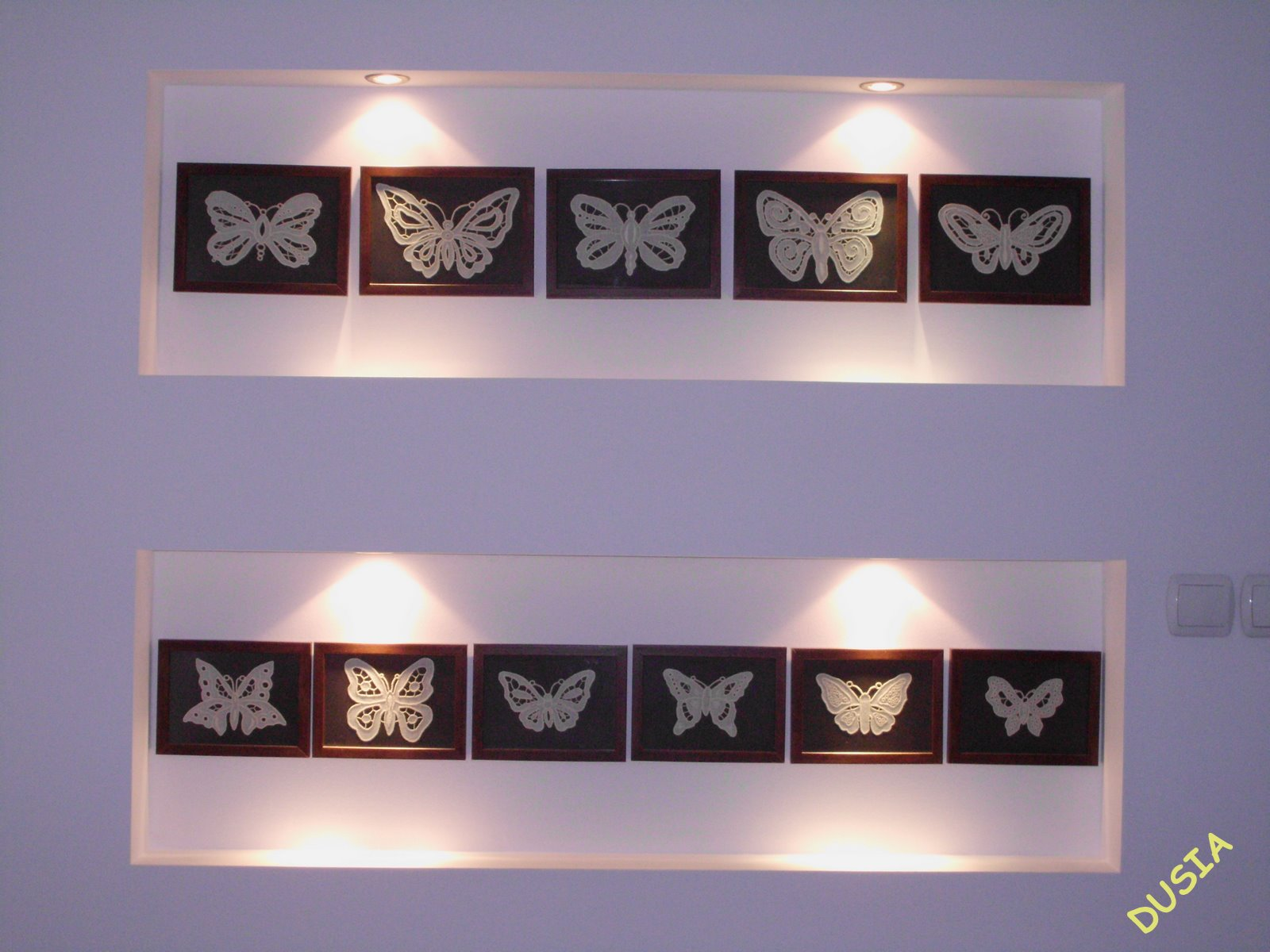 Motyle w ramkach