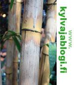 Kylväjä-blogiin